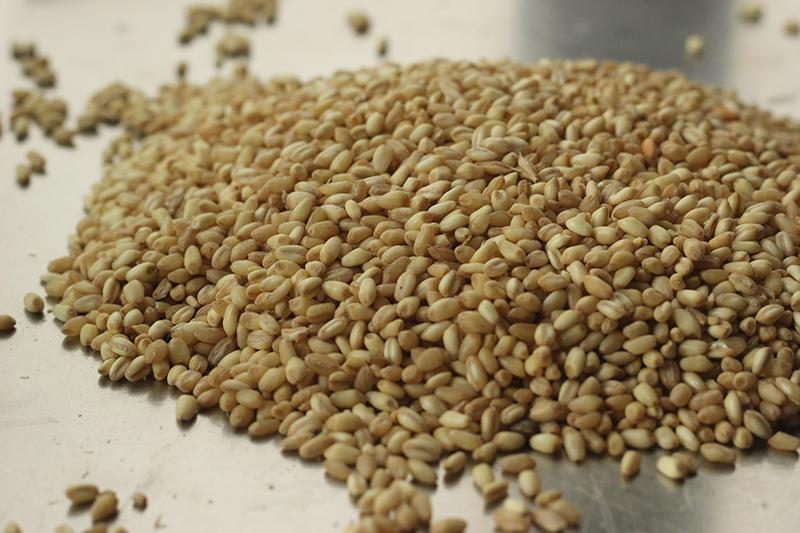 القمح المقشور